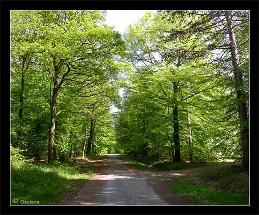 Sur le Long Sentier qui se perd dans la Forêt, le Visiteur de Passage Flâne sous les Verts Ombrages.