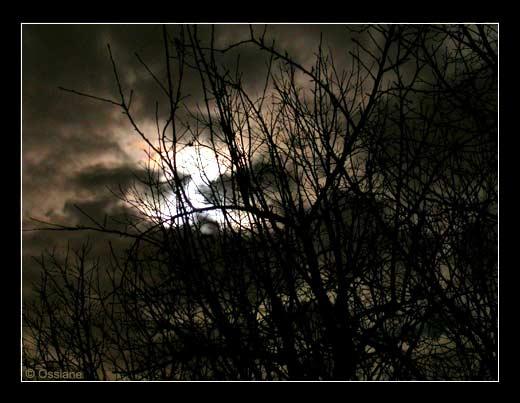 La Lune Blanche se Glisse entre les Branches dans un Corps de Rêve.