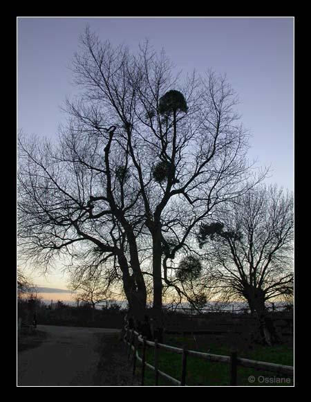 L\'Arbre des Songes sur le Chemin de la Nuit Raconte sa Vie.