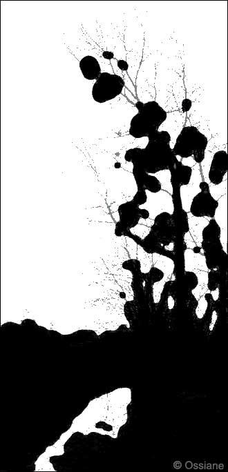 La Plume dans l\'Eau, Bulles d\'Encre de Chine sur le Papier de Soie.