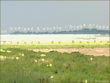 Fleurs de Soufre, un Goéland S\'envole, l\'Orage Gronde.