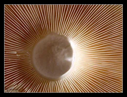 Faisceau Solaire, Jaillissement de la Terre, Eventail de Lumière.