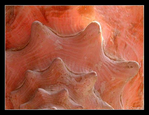 Le Coeur en Etoile, Frissons de Porcelaine de la Fleur de Corail.