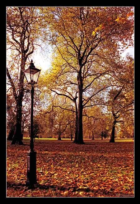 Mes Pensées S\\'Envolent dans l\\'Arborescence Dorée, un Dimanche au Parc.