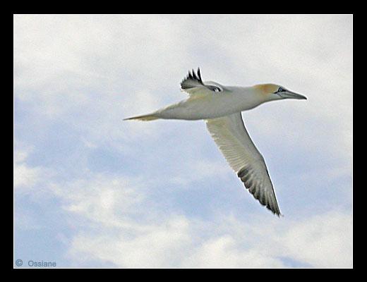 L'Oiseau des Mers Fend les Airs, Silhouette Profilée, Forme Fuselée, Ligne Dynamique, Vol Supersonique