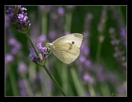 Papillon Loeil Ouvert Photo Et Poésie